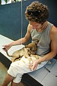 Assagao Goa, India, sick dog recovering at the International Animal Rescue center