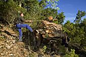 Muleteer removing the cork from a cork oak in the Valle de Las Batuecas, inside the Las Batuecas-Sierra de Francia Natural Park, Sierra de France, in the province of Salamanca, Castilla y Leon, Spain