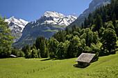 Landscape at the base of the mountain of Eiger  Grindelwald, Alpiglen  Kleine Scheidegg  Grassland and livestock  Berneses Alps  Switzerland