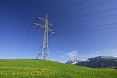 Electricity pylons in meadow with dandelion, Allgaeu, Bavaria, Germany