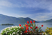 Floral decoration in front of lake Maggiore with isle of Brissago in the background, Isole di Brissago, Ronco sopra Ascona, lake Maggiore, Lago Maggiore, Ticino, Switzerland