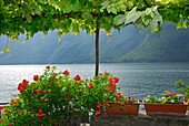 Vine covered arbor with flowers at lake Lugano, Lago di Lugano, Gandria, Ticino, Switzerland
