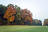 Germany, Bavaria, Munich, Parc of Nymphenburg Palace, Autumn, Tree, Leafes
