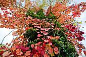 Autumn foliage, Nymphenburg palace park, Munich, Bavaria, Germany