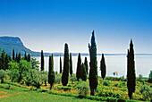Zypressen am Seeufer unter blauem Himmel, Gardasee, Venetien, Italien, Europa