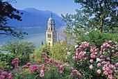 Blühende Rosens vor dem Kirchturm von Morcote und dem Lago di Lugano, Tessin, Schweiz, Europa