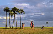 Palm trees and ricefield landscape, Kampong Chhnang, Cambodia
