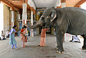 Devotees receiving  blessings from the temple elephant at Adi Kumbeshvara Temple in Kumbakonam. Kumbakonam is one of the most sacred cities in Tamil Nadu, India.