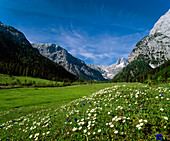 Flower meadow at valley Falzthurntal in the sunlight, Karwendel mountains, Austria, Europe