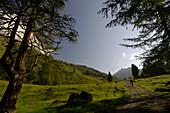 Woman hiking in an idyllic landscape in the sunlight, Hohe Tauern, Austria, Europe