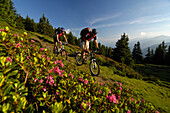 Two people on a mountain bike tour at Grenzkamm, Wipptal, Brenner, Tyrol, Austria