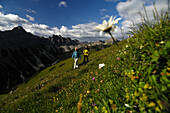 Couple hiking in the mountains, Tannheimer Mountains, Allgaeu Alps, Tirol, Austria, Europe