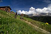 Two men on a mountainbike tour, MTB, near Welschnofen, Rosengarten Mountain Range, Dolomiten, South Tyrol, Italy, Europe
