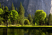 Sunlit trees in front of Cathedral Rock, Yosemite National Park, California, North America, America