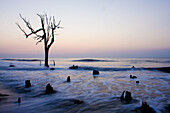 Color, Colour, Course, Deadfall, Driftwood, Erosion, Nature, Natures, Oceans, Preservation, Summer, Sunrise, A06-826149, agefotostock