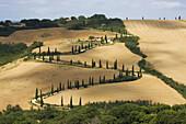 Landscape,  Tuscany,  Italy
