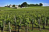 France. Gironde. ´Chateau Montagne´ surrounded by vine fields,  in the Bordeaux Saint Emilion wine district.