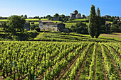 France. Gironde. Montagne Saint Emilion,  surrounded by vine fields,  in the Bordeaux wine area.