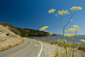 California, Route 1, through Pointe Reyes National Seashore