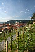 Vineyards overlook mala stana from hradcany castle gardens. Prague. Czech Republic.