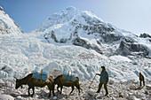 Expedition on the way to Everest base camp, Nuptse glaciar, Khumbu, Nepal