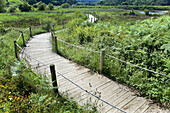wooden footbridge in marsh landscape  Noja, Santoña marshes Natural Reserve, Cantabria, Spain, Europe
