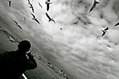 Asien, Aussen, Bewölkt, Boot, Boote, Bosporus, Diagonal, Draussen, Eine Person, Eins, Erwachsene, Erwachsener, Europa, Fliegen, Flug, Flüge, Halbfigur, Himmel, Horizont, Horizonte, Istanbul, Länder, Mann, Männer, Männlich, Mensch, Menschen, Möwe, Möwen, P