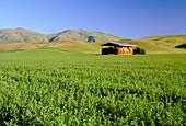 Southland Farmlands, South Island, New Zealand