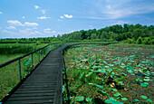Boardwalk, Wetland, Fogg Dam, Northern Territory, Australia