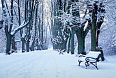 Avenue with bench in winter, Bavaria, Germany