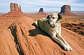Hund liegt auf Felsen im Monument Valley, Anatolischer Hirtenhund, Kangal, Monument Valley, Arizona, USA