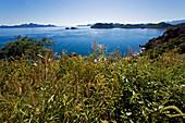 Blick über eine Wiese auf eine große Bucht am Meer die mit Inseln umgeben ist, Bahia Concepcion, Sea of Cortez, Mulege, Baja California Süd, Mexiko