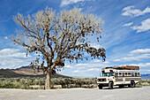 Blick auf einen Amerikanischen Schulbus der neben einem Baum steht an dem tausende von Schuhen hängen, Glücksbringerbaum, US Highway 50, Middlegate, Nevada, USA
