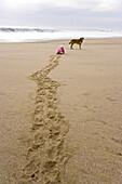 Child crawling over the beach towards a dog, Punta Conejo, Baja California Sur, Mexico