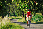 Female cyclist passing alley with fruit trees, Danube Cycle Route Passau to Vienna, Wachau, Lower Austria, Austria