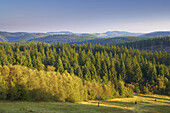 Morning mood an mount Kahler Asten, Rothaargebirge, Sauerland, Winterberg, North Rhine-Westphalia, Germany