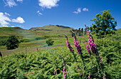 Scenery near Ben Hiant in summertime, Ardnamurchan, Highland, UK, Scotland