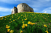 Clifford's Tower in springtime, York, Yorkshire, UK, England