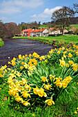 Village of Sinnington in springtime, Pickering, near, Yorkshire, UK, England