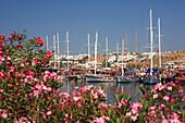 View over flowers to gulets in Gumbet Bay, Gumbet, Aegean, Turkey