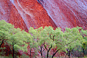 Trees in front of Rock, Ayers Rock, Northern Territory, Australia