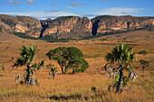 View across grassland to rocks, Isalo National Park, Madagascar