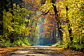 Colourful trees in autumn, Forest, Trees, Natural World