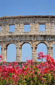Roman amphitheatre and flowers, Pula, Istria, Croatia