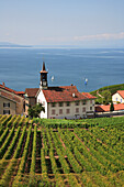 Lakeside village and vineyards, General, Vaud Canton, Switzerland
