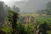Fields in the morning light in the hills, Mae Sariang, Province Mae Hong Son, Thailand, Asia