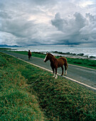 Horses on a coast road, thunder clouds above the sea, Eastcape, North Island, New Zealand