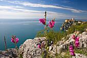 Duino castle is located north of Trieste, Friuli-Venezia Giulia, Upper Italy, Italy