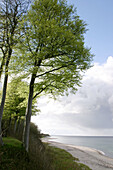 Natural coast,  beach,  deciduous forest,  Strande,  the Baltic Sea,  Schleswig-Holstein,  Germany