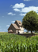 St Alban medieval chapel (12th century),  corn field and tree,  Kleingoeft. Alsace,  France